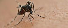 zika virus cepelli